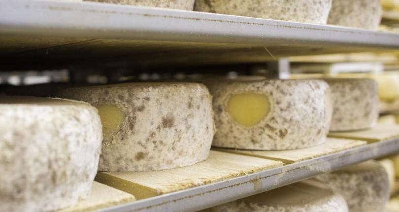Paški sir, svetovni prvak med siri