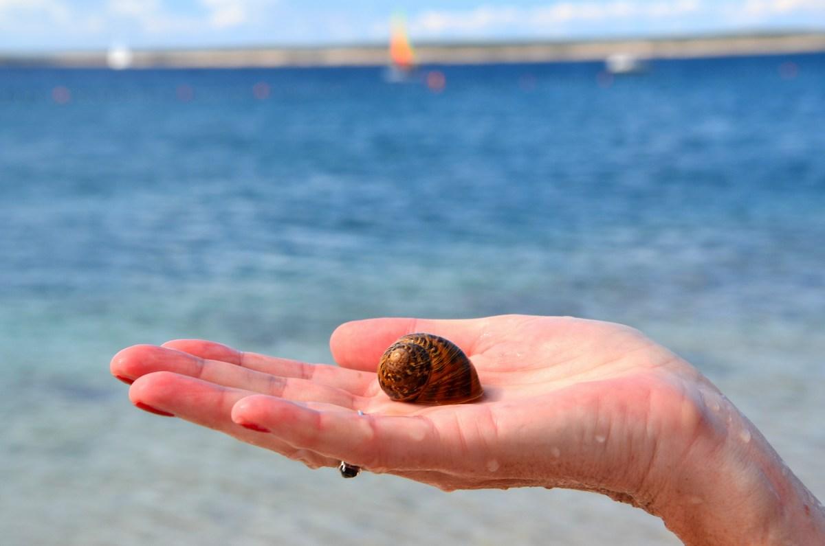 """Ko sam najdeš spominek na dnu morja … Si vesel kot """"radio""""."""
