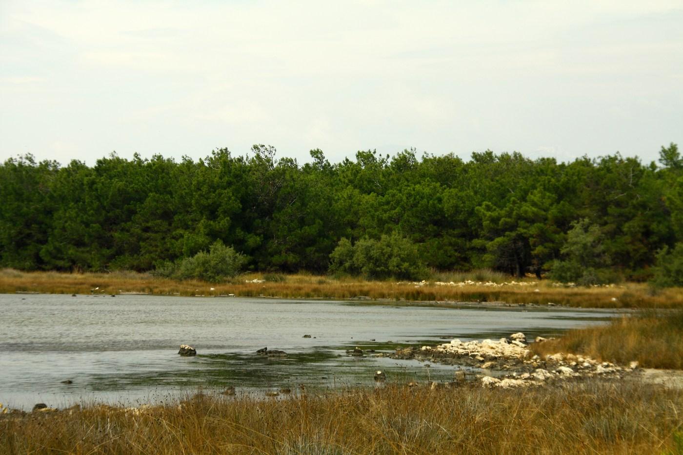 povljana_blato_gozd