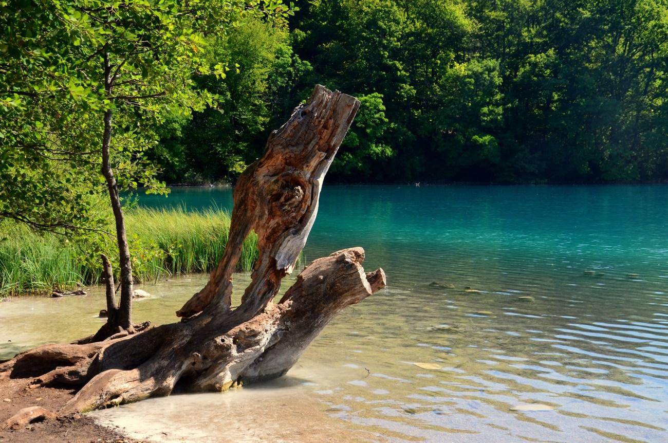 Pravo tihožitje ob jezeru, kajne?