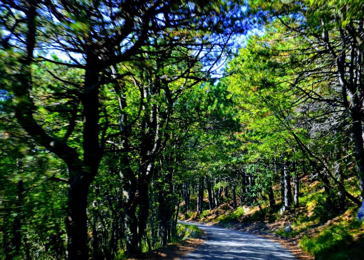 Najprej se peljemo skozi gost gozd.