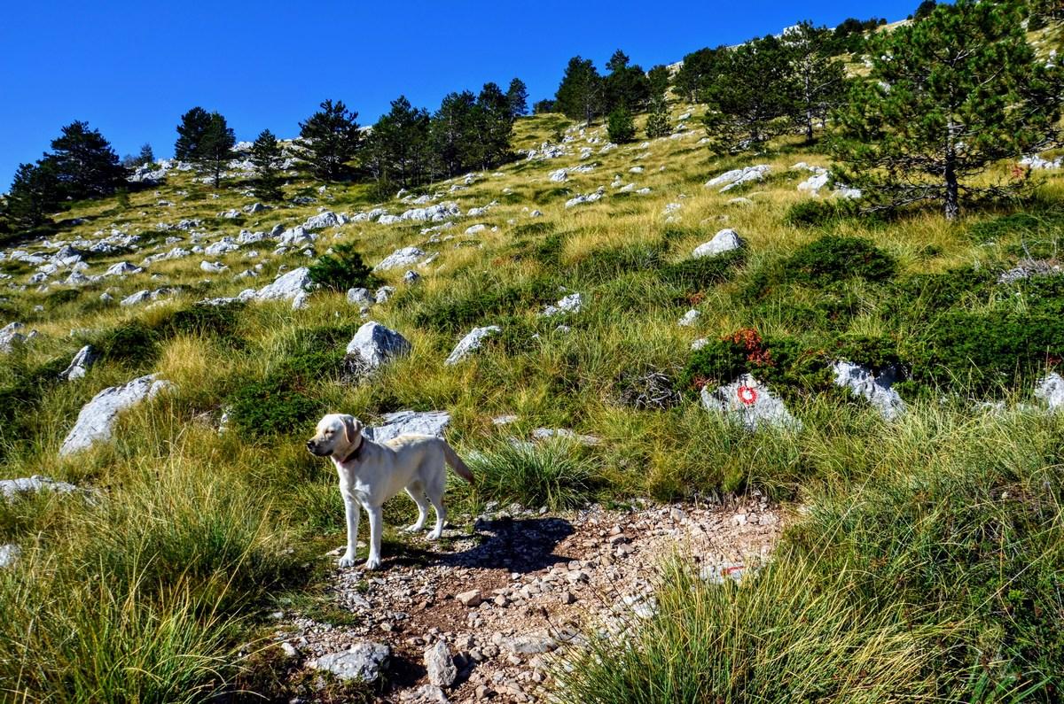 Pot je enostavna, uživaška tudi za pse.