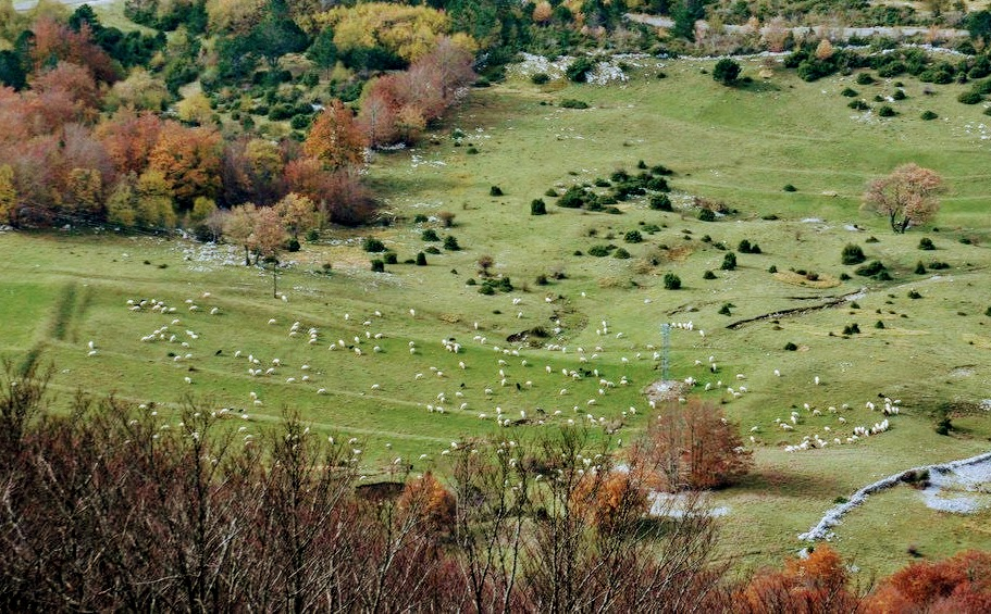 Pod Vojakom se pasejo ovce