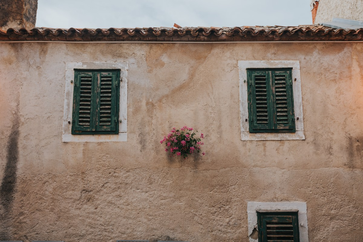 Roža v zidu