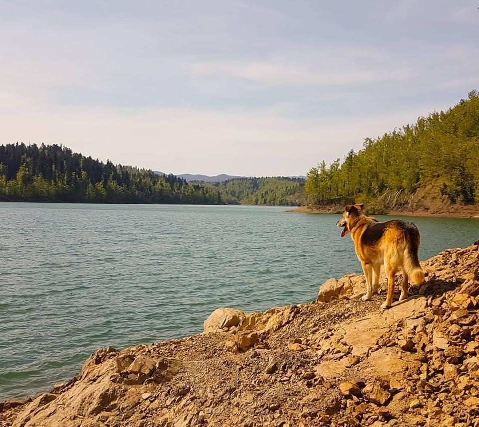 Kuža ob Lokvarskem jezeru