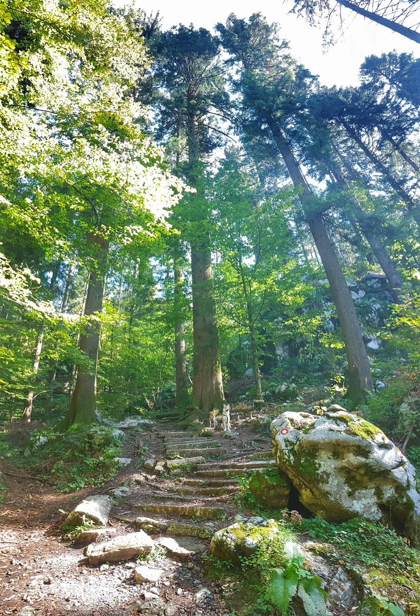 Stopnice v gozdu