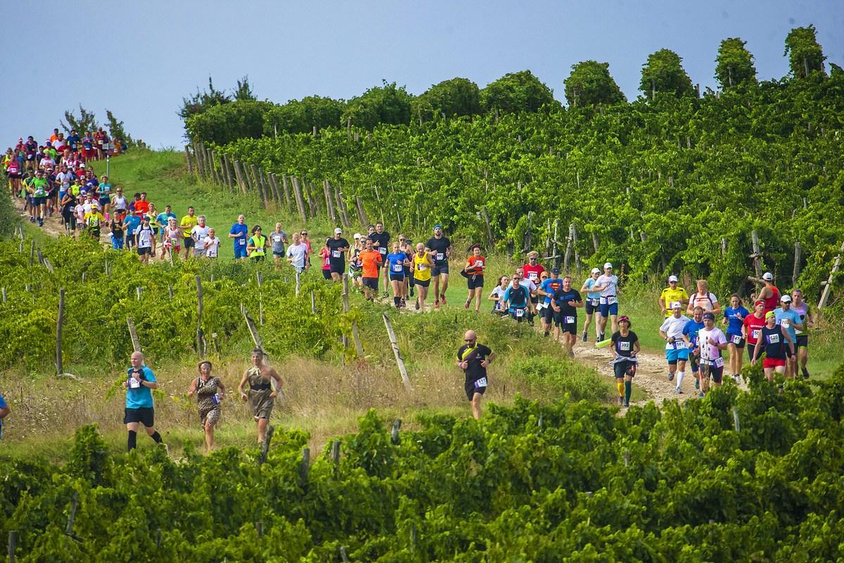 Tekači med vinogradi