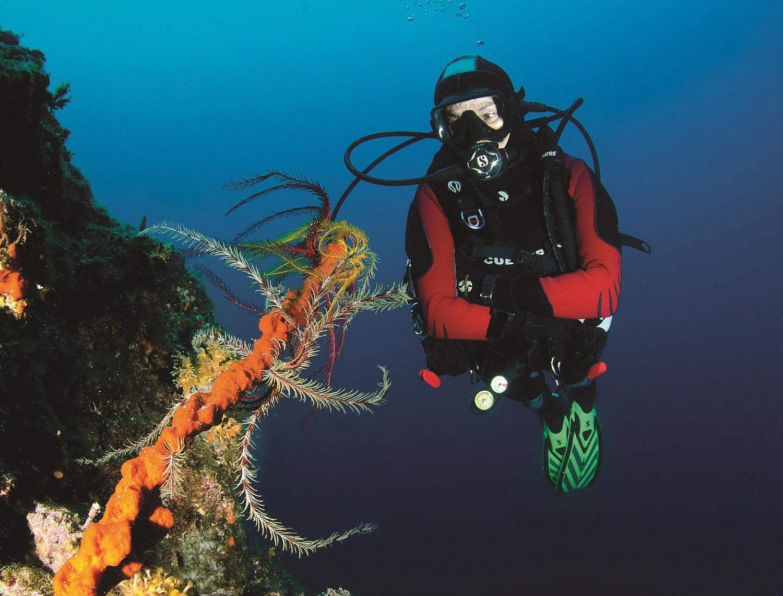 Potapljanje nam omogoča, da si pobližje ogledamo podvodni svet in življenje, ki je nam, ki živimo na kopnem nekaj povsem novega in zanimivega. Foto; HTZ in Indux Media