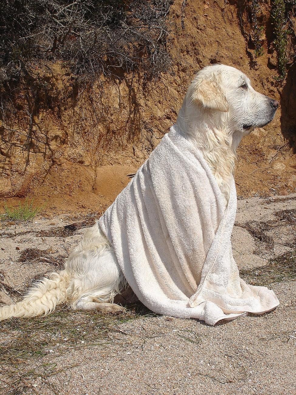 Psa po kopanju obrišemo. Da se prej posuši, da se ne naredijo morebitna vnetja.