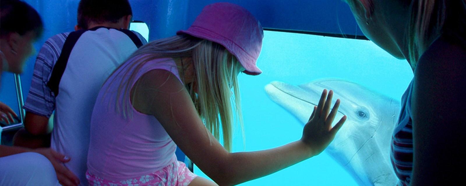Otroci so najbolj hvaležni za tole vodno izkušnjo. Na sliki delfin komunicira s punčko.