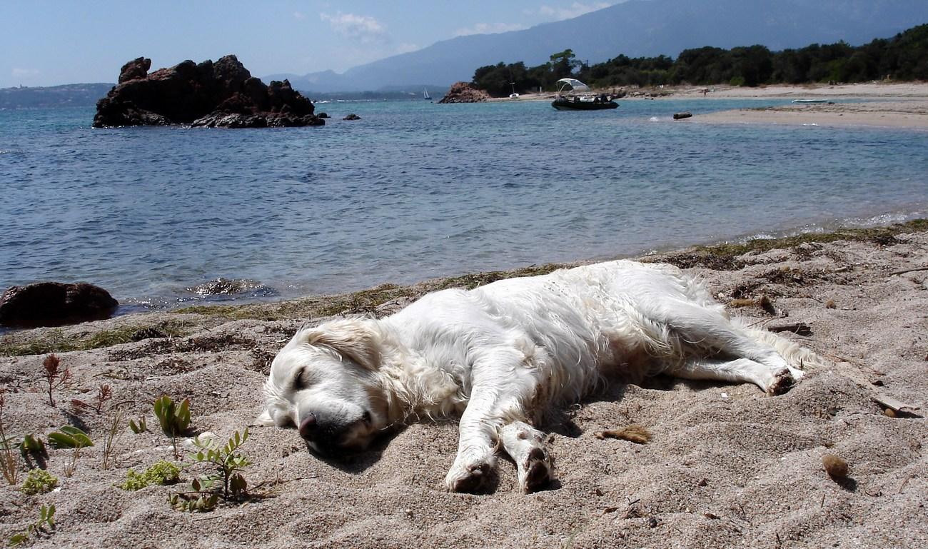 Počitek po dolgem plavanju. Oz. utrujen kot pes.