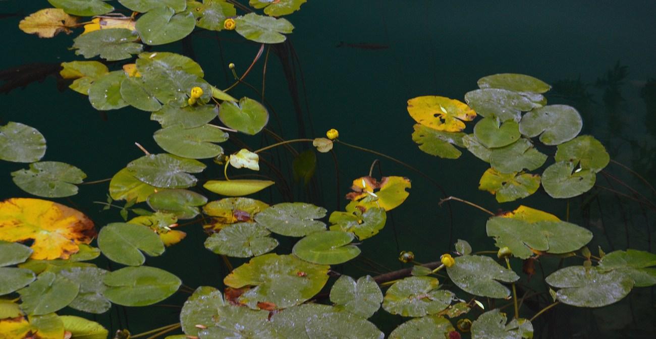 V NP Krka najdemo 860 rastlinskih vrst.