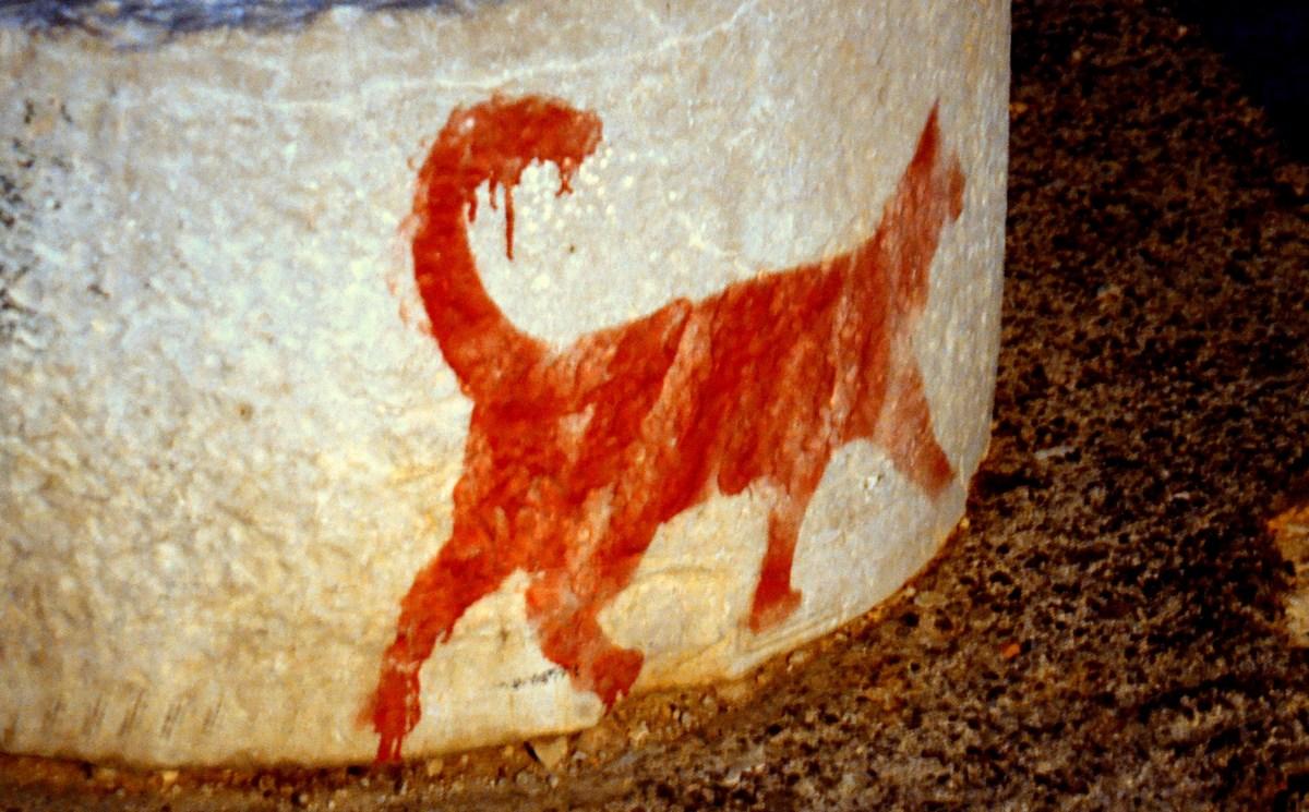 Mačka na kamnu