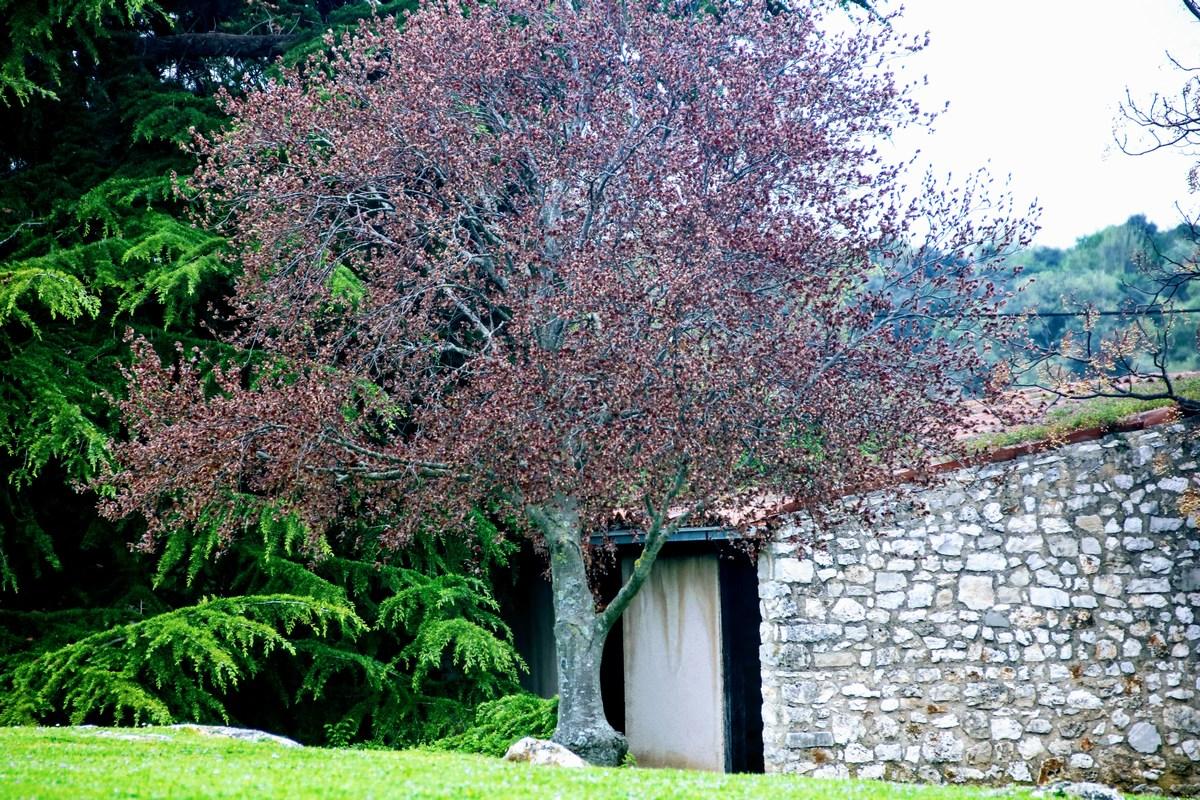 Drevo ob hiši