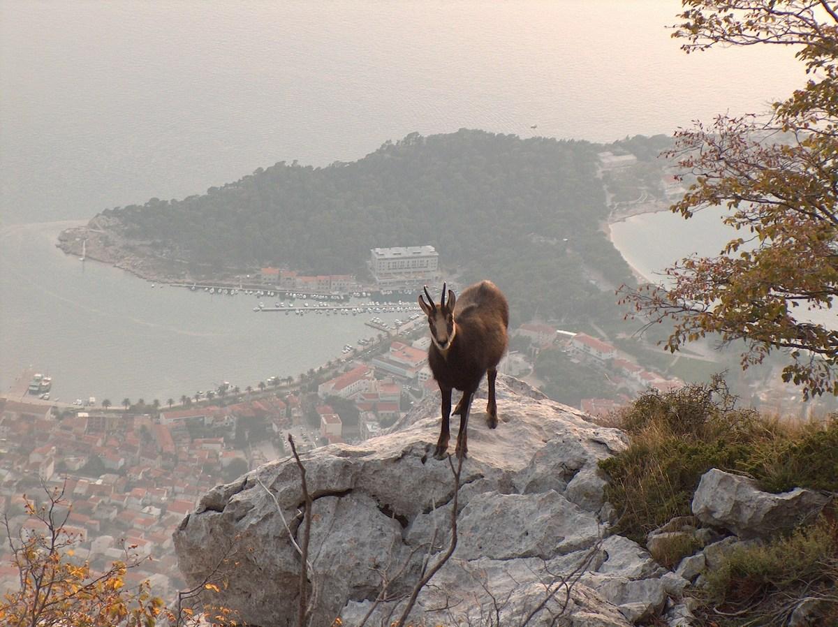 Makarska, fotosprehod