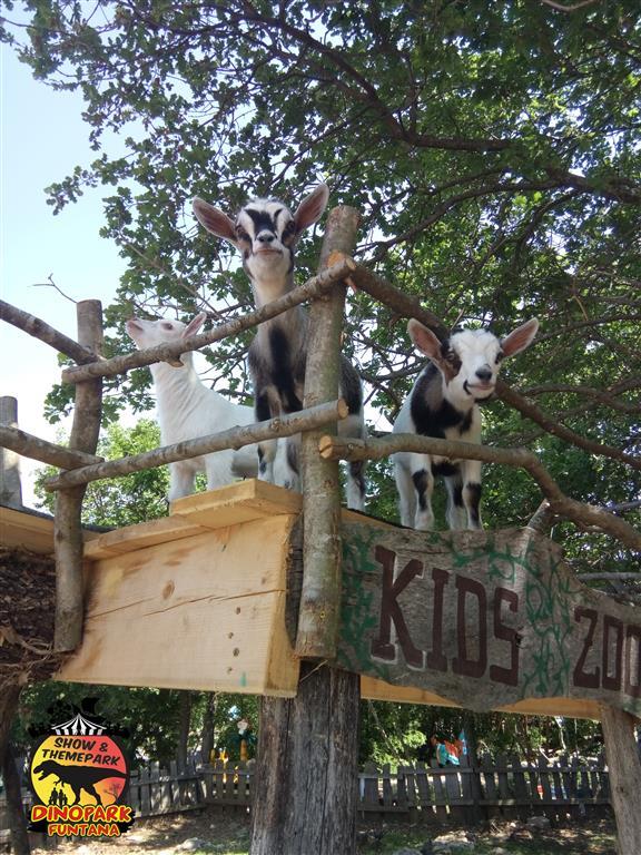 otroški zoo