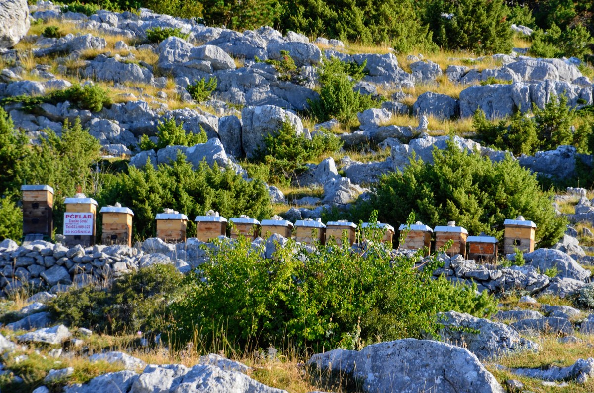 Tudi čebelarji so v bližini.