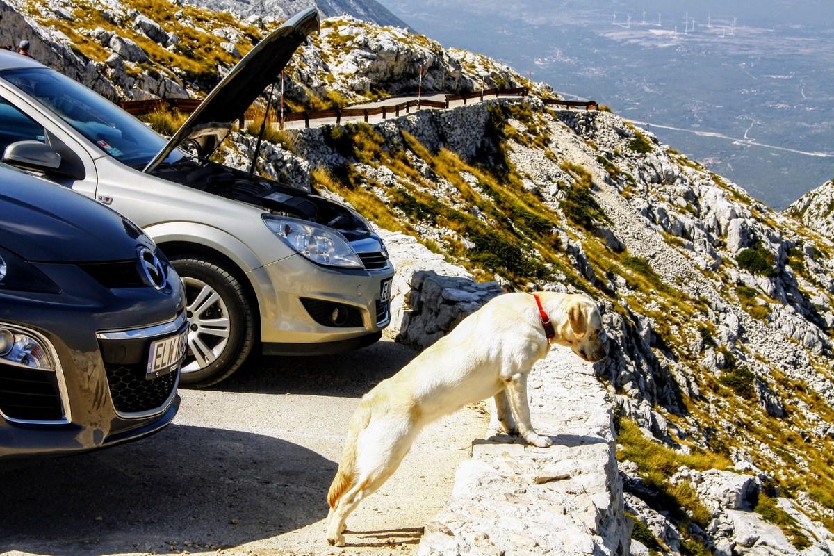 Nekateri hladijo motorje. Psi pa uživajo v razgledih.