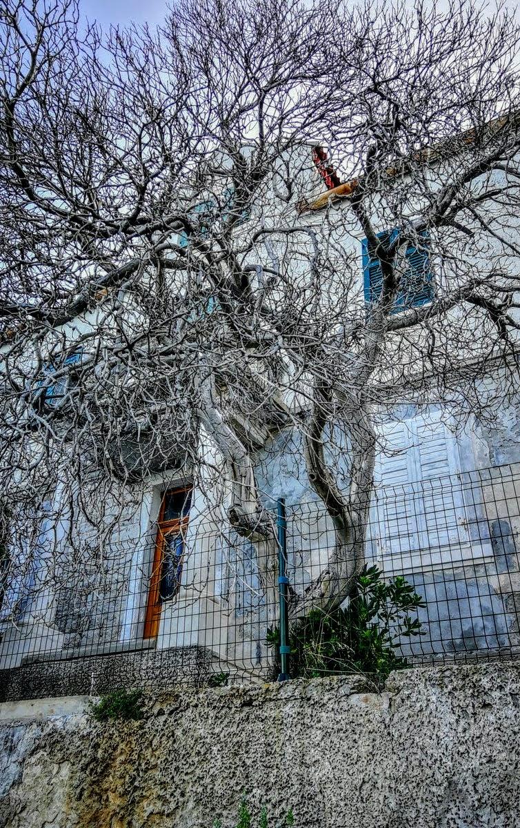 Posušeno drevo