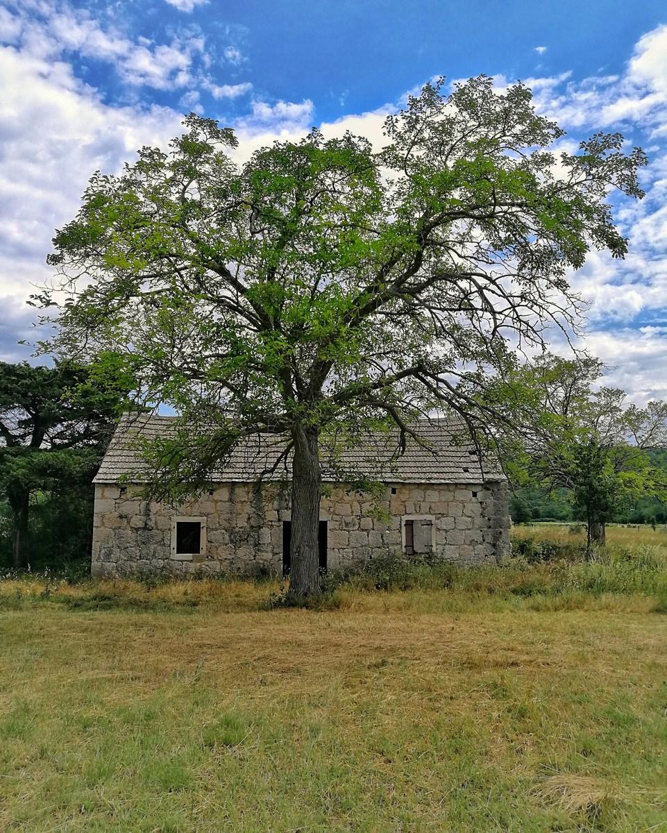 Zapuščena kmetija