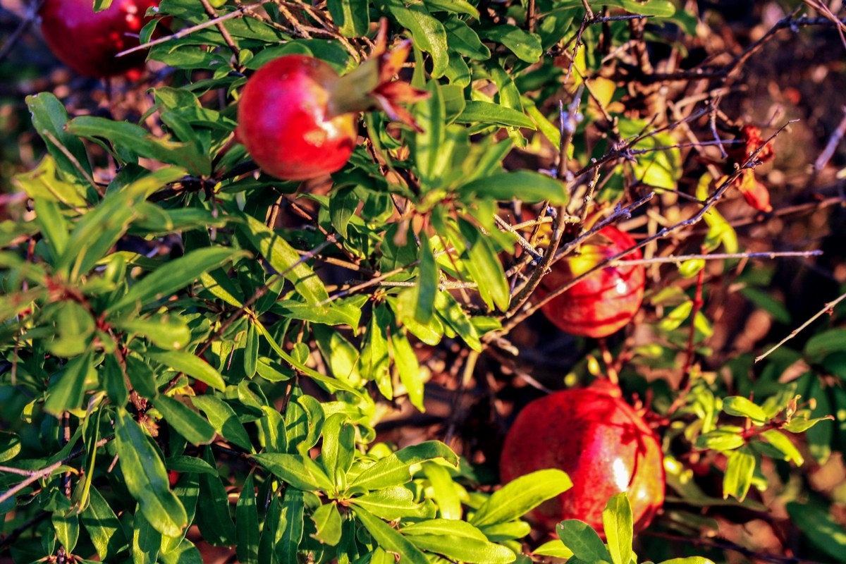 Obilo različnega sadja