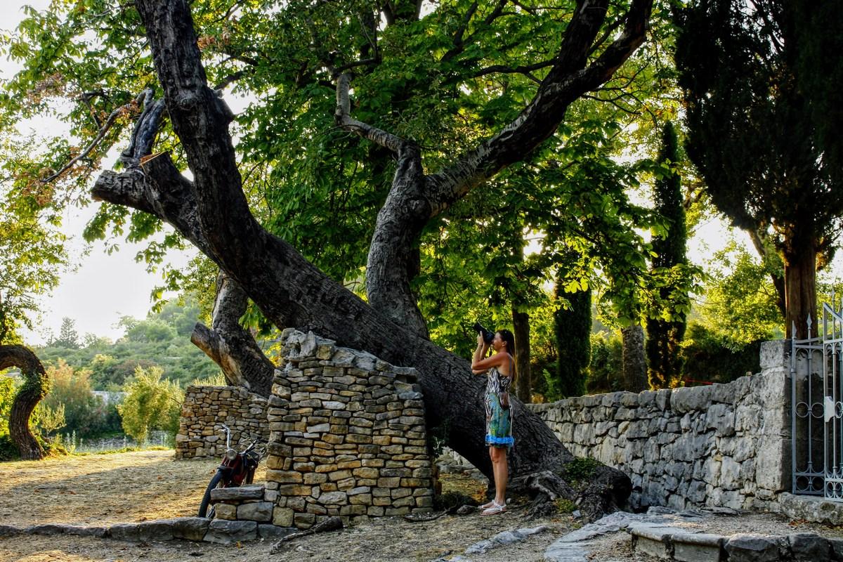 Podprto drevo