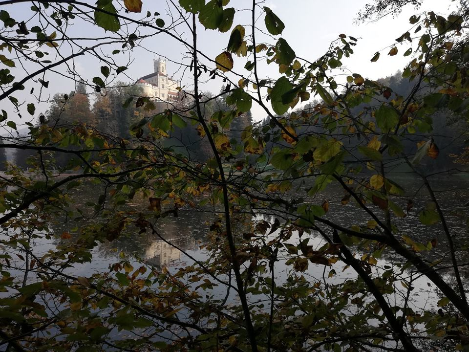 Dvorec skozi listje