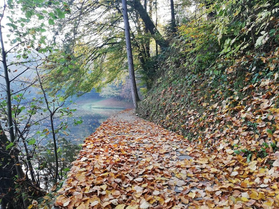 Listje odpada
