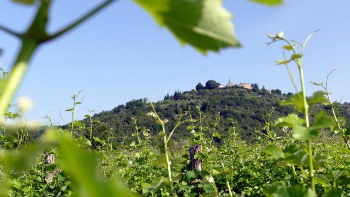 Cesta vina in razgledov