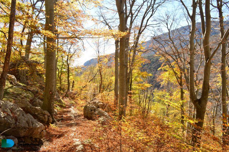 Lika_destination_bukova šuma_jesen