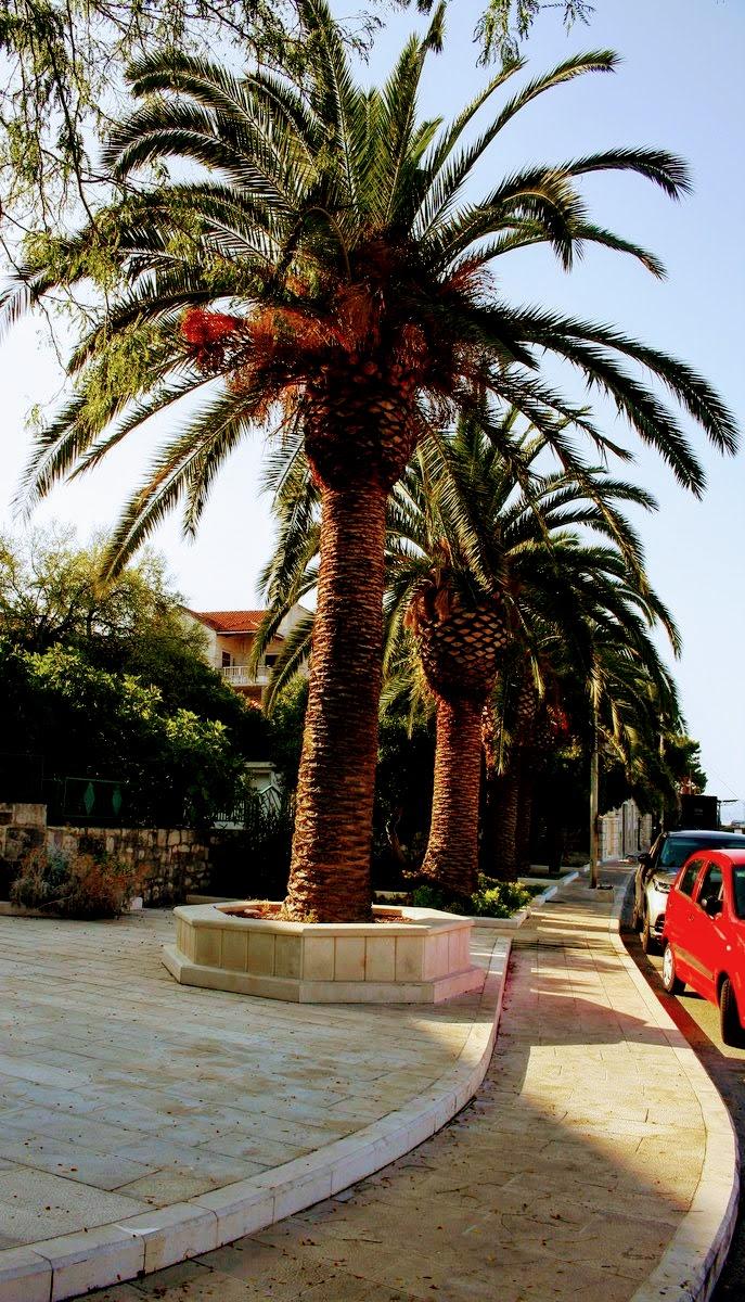 Palme ob obali