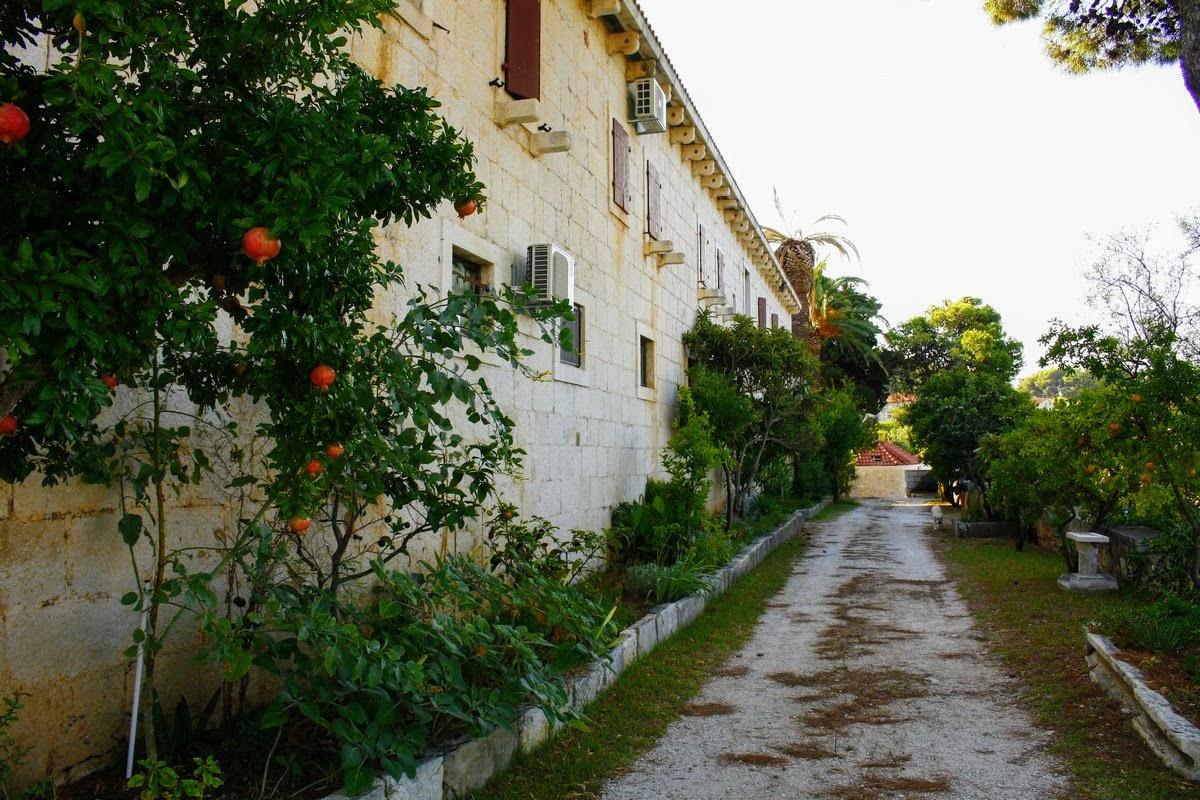 Polno rastlin ob samostanu