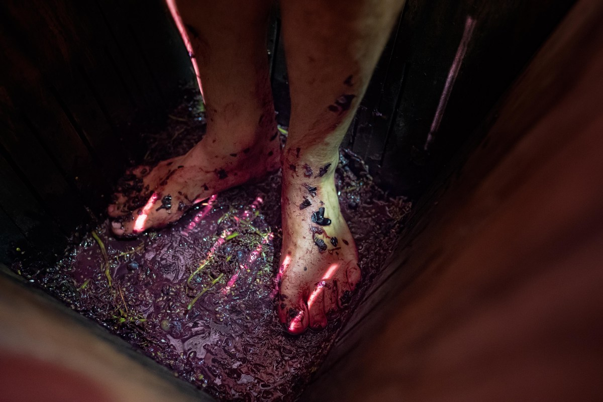 Stiskanje grozdja