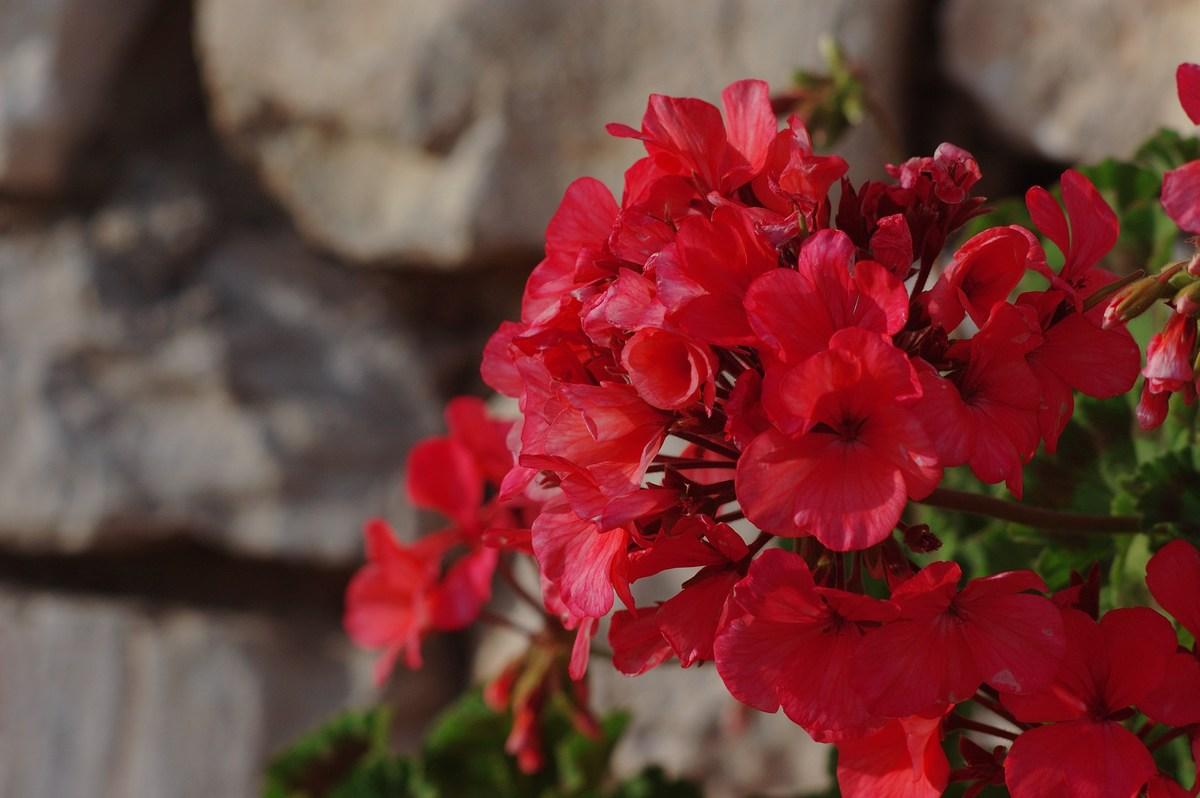 Zasajenih je polno rož