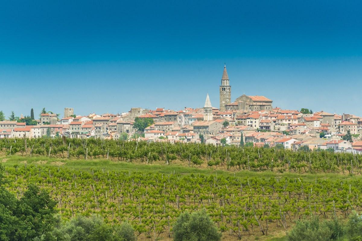 Vinogradi in Buje