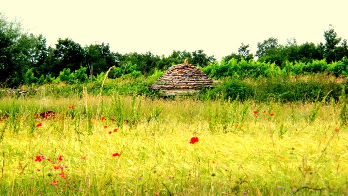 Kažuni – kamniti stražarji istrskih olivnjakov in vinogradov