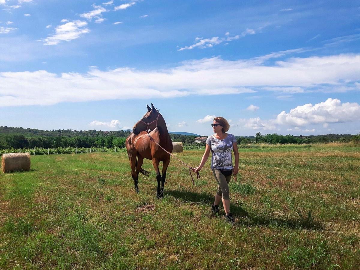 Golden Valley Horses