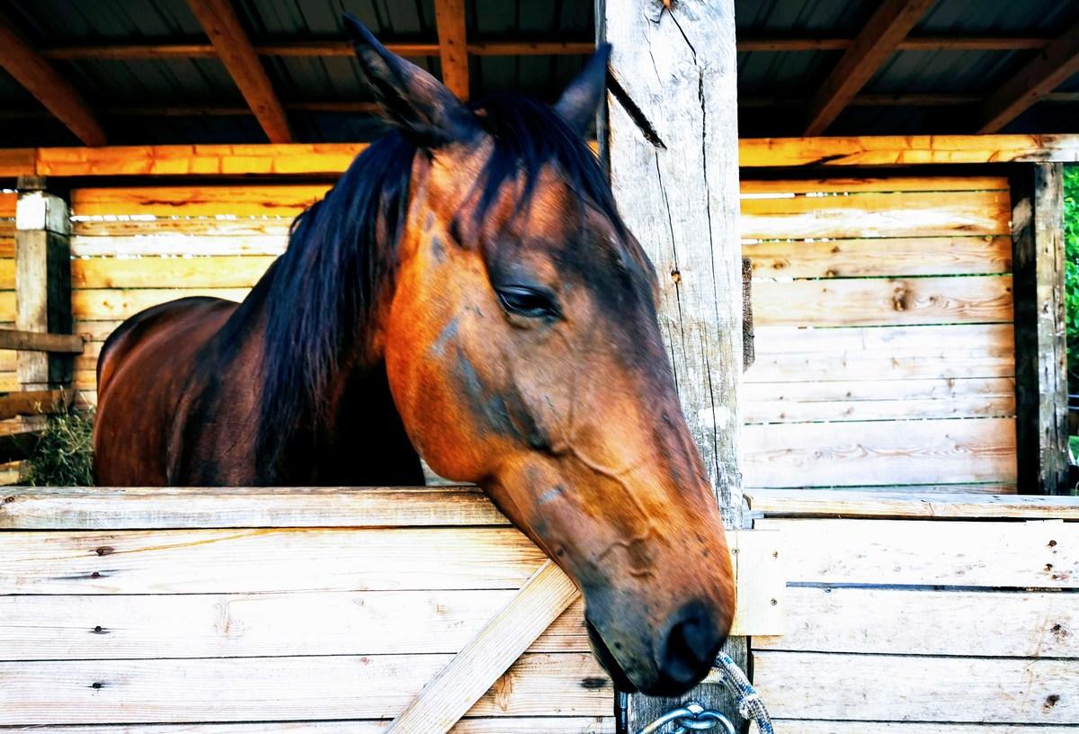 Konj Trojan