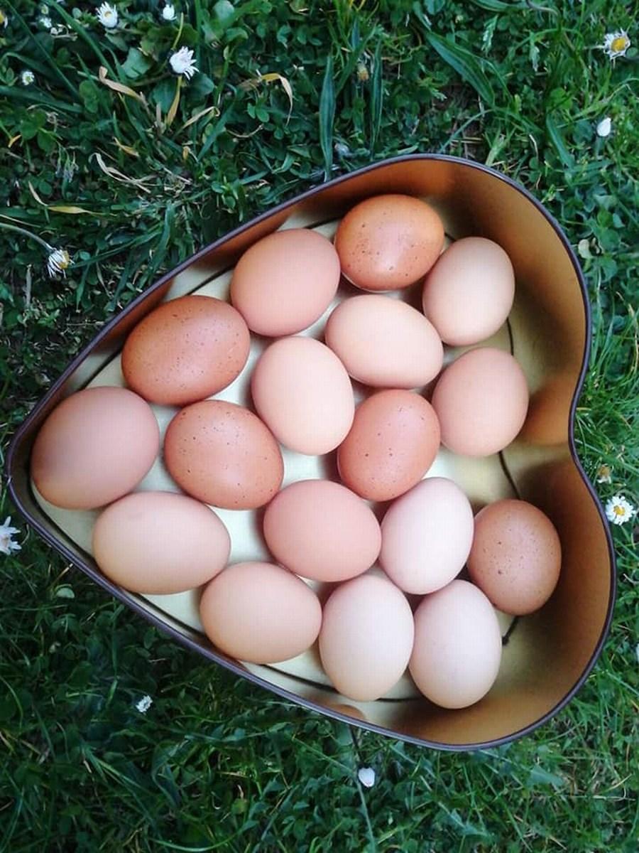 Srce in jajca