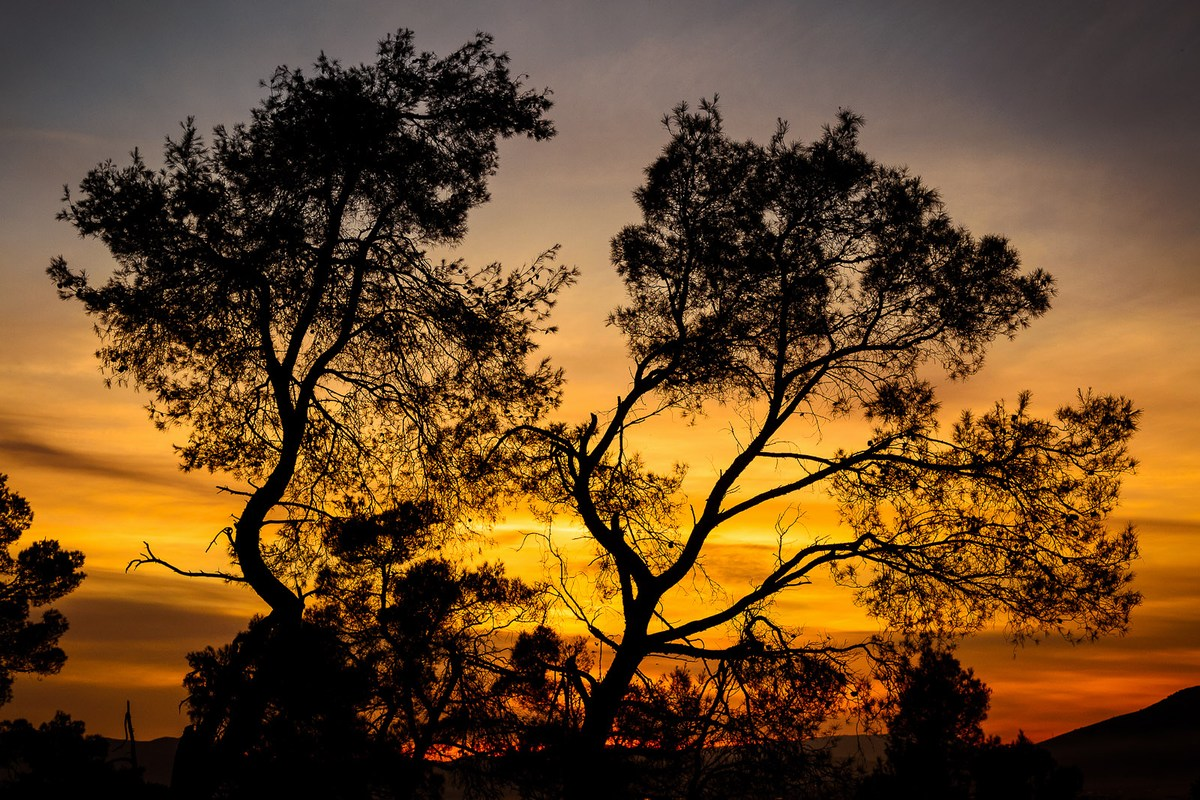 Drevo in sončni zahod