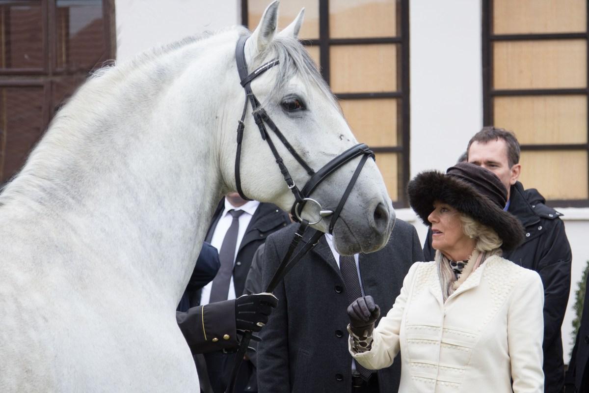 Obisk vojvodinje Camille