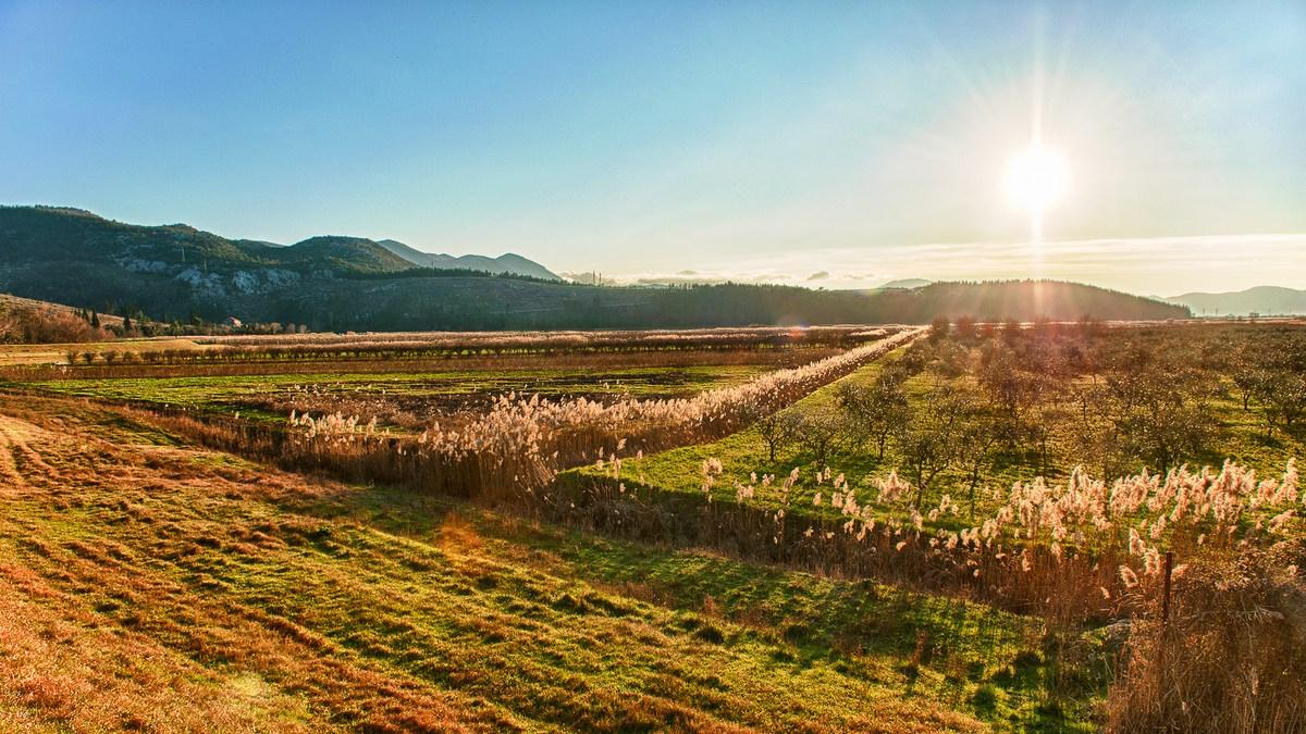 Polja in travniki