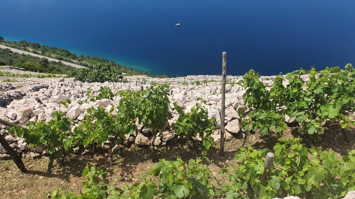 Suhozidi in vinogradi, foto Creative Media