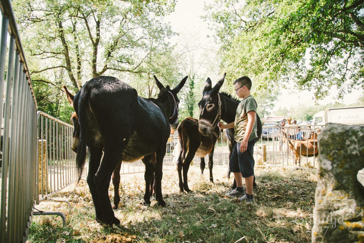Bartulja, največji kmečki festival v Istri