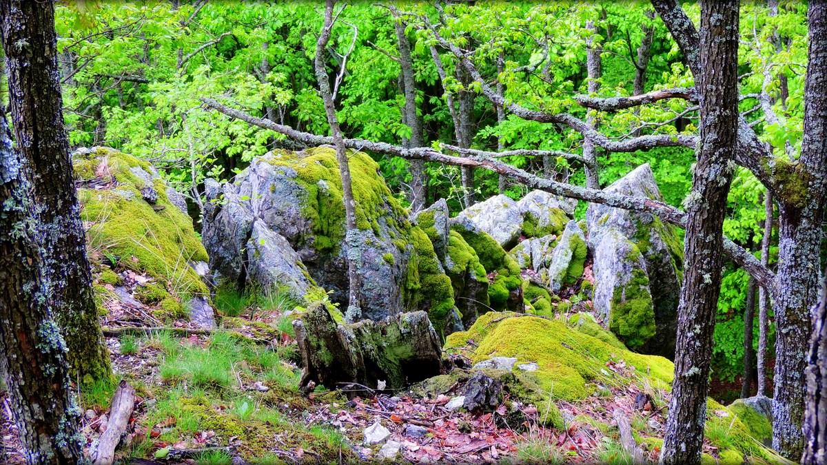 Bujna vegetacija