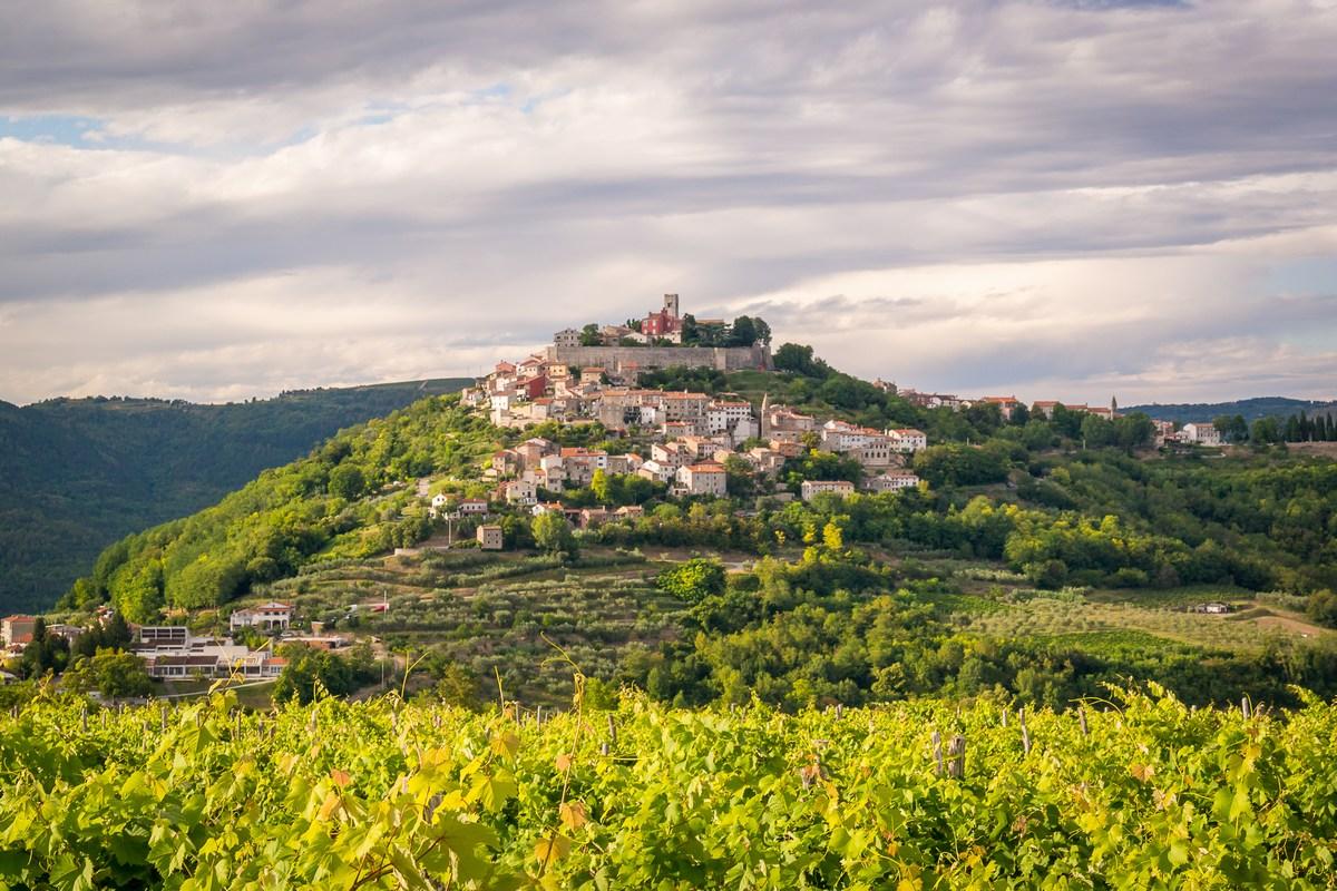 Motovunski vinogradi