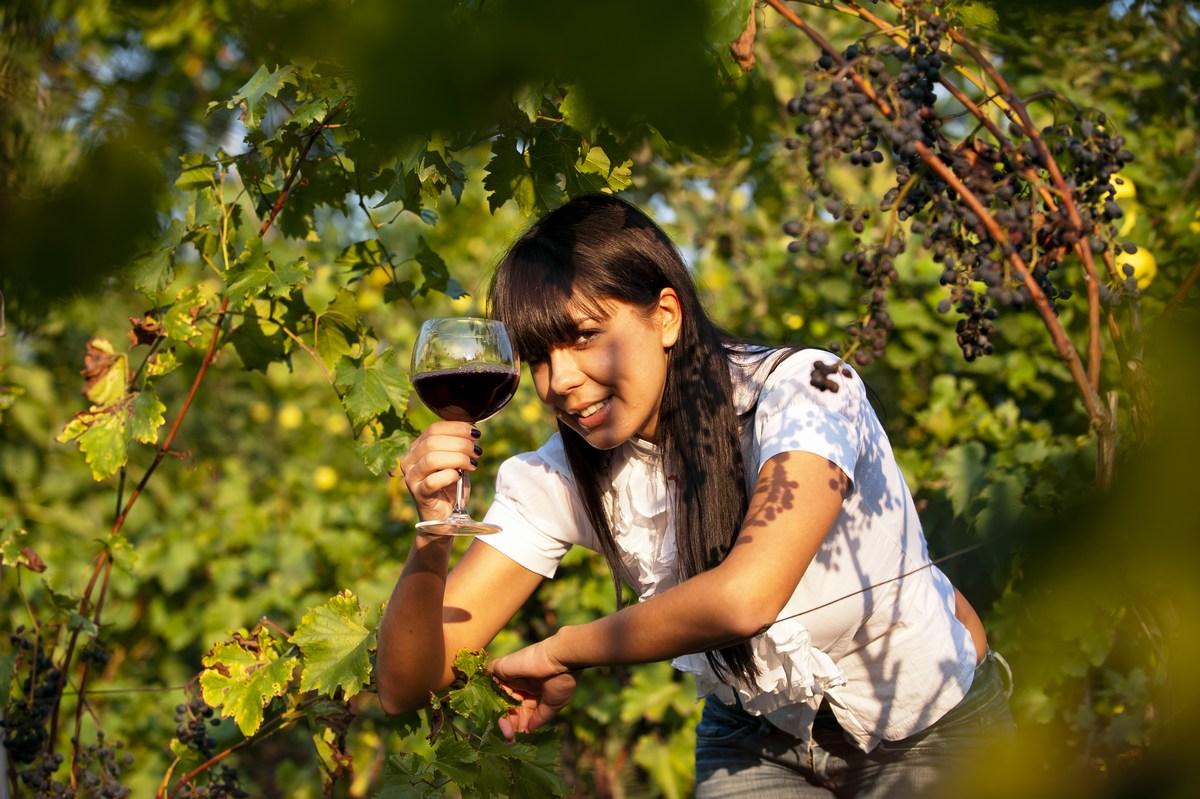 Hrvaško vino, vinogradi, vinske kleti