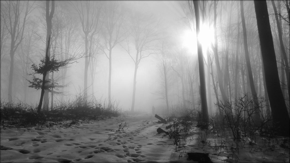 Zimski sprehod