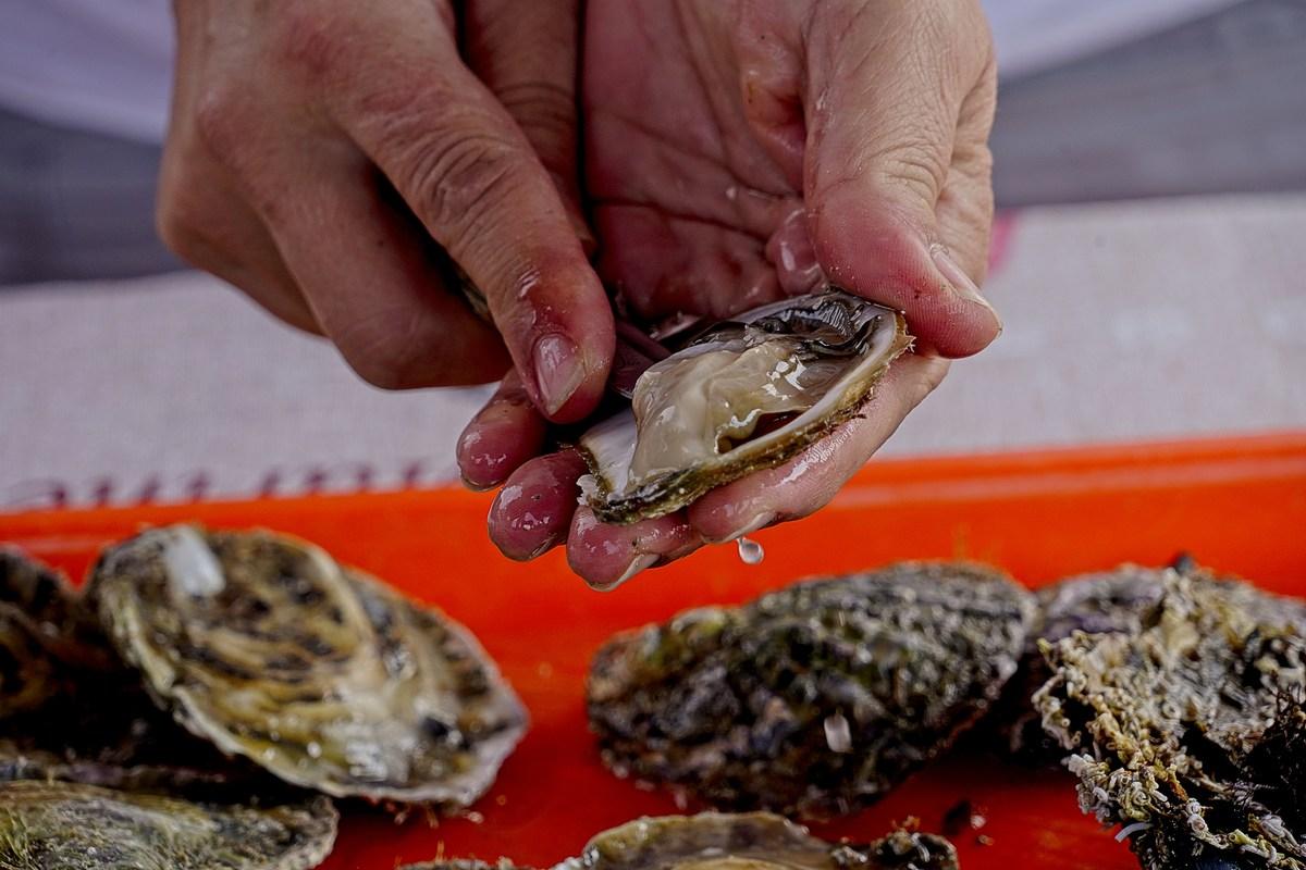 Otvaranje kamenice je umijeće ,a njen savršeni okus dobro je poznat mnogobrojnim ljubiteljima