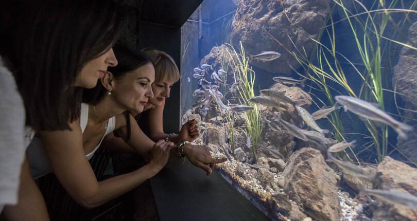 Aquatika, sladkovodni akvarij v Karlovcu